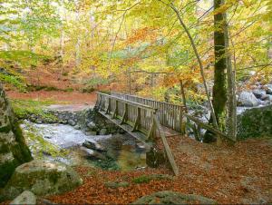 Promenade d'automne dans la fôret de Vizzavona et ses ruisseaux au centre de la Corse
